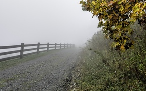 Picture autumn, grass, leaves, trees, fog, the fence, the fence, USA, path, North Carolina