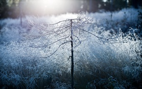 Picture morning, beauty, mist, disforestation, frost