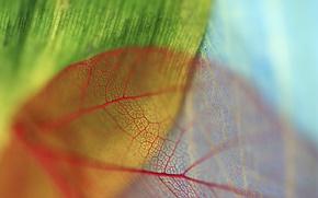 Wallpaper red, bokeh, veins, blue, green, leaves