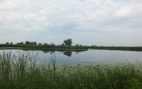 Picture greens, grass, trees, reflection, reed, the bushes, Volga, water lilies, river