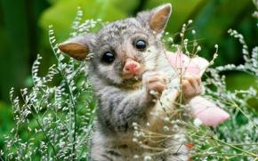 Picture nature, plant, cub, possum, mammal
