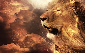 Picture background, widescreen, Wallpaper, Leo, head, mouth, wallpaper, widescreen, background, Wallpapers, Lion, full screen, HD wallpapers, …
