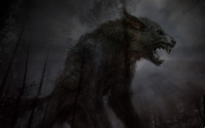Picture forest, night, twilight, lycanthrope