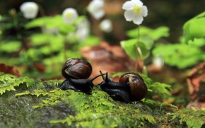 Picture leaves, macro, flowers, snails, girlfriend
