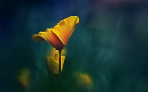 Picture flower, macro, yellow, background, stem
