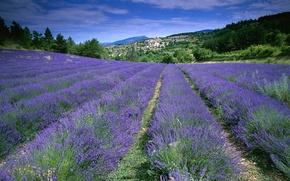 Wallpaper field, flowers, France, lavender, Provence