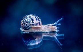 Wallpaper macro, reflection, background, snail