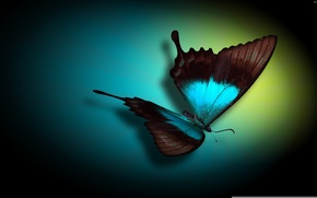 Wallpaper color, oval, butterfly