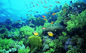 Picture fish, corals, underwater world