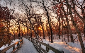 Picture winter, forest, the sky, the sun, clouds, snow, trees, landscape, sunset, nature, the way, white, ...