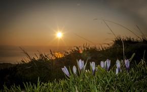 Picture the sun, macro, flowers, Switzerland
