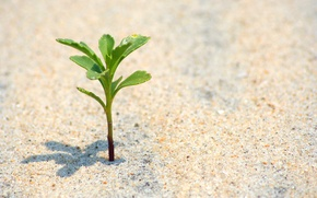 Wallpaper macro, life, leaves, beach, sand, sands, life, plant, Rastoke, alive, alone, nature