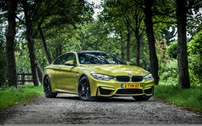 Picture BMW, forest, road