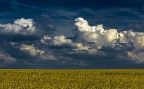 Wallpaper field, the sky, clouds, horizon