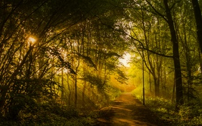 Picture forest, trees, Park, track, lantern, alley, the rays of the sun