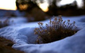 Wallpaper Bush, Grass, snow, winter
