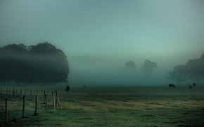Picture grass, trees, fog, the fence, cows, meadow