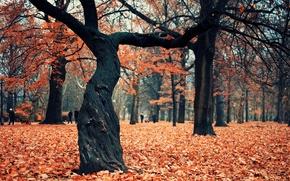 Picture autumn, Park, tree