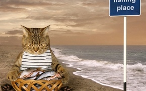 Picture cat, fish, catch