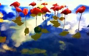Picture line, birds, reflection, paint, Flamingo
