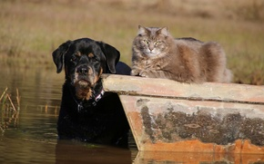 Picture cat, look, dog, friends