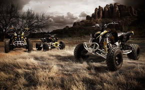 Wallpaper ATVs, Rocks, The herd