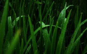 Picture drops, macro, Rosa, moisture, Rav