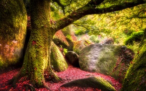 Picture autumn, forest, leaves, trees, stones, moss