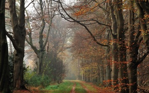 Picture autumn, forest, fog, track, forest, Autumn, fog, path, fall