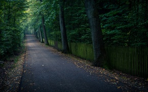 Picture leaves, trees, nature, background, tree, widescreen, Wallpaper, track, wallpaper, leaves, path, trees, nature, widescreen, background, …