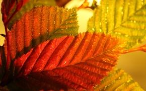 Picture autumn, leaves, macro, color