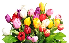 Wallpaper bouquet, wet, colorful, white background, tulips