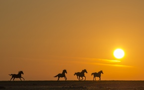 Picture field, sunset, horse, silhouette, running