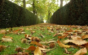 Picture Autumn, Leaves, Alley, Fall, Foliage, Track, Autumn, Falling leaves, Leaves, Alley, Path
