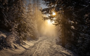 Picture road, forest, the sun, snow