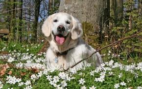 Wallpaper summer, flowers, dog