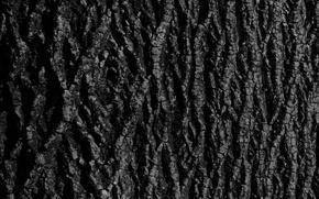 Wallpaper tree, bark, texture, background