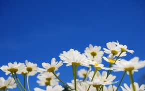 Wallpaper the sky, flowers, yellow
