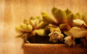Picture style, background, cactus