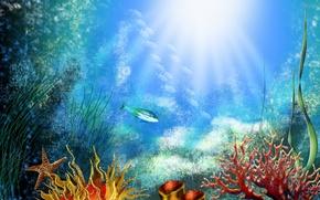 Wallpaper fish, algae, corals, The bottom