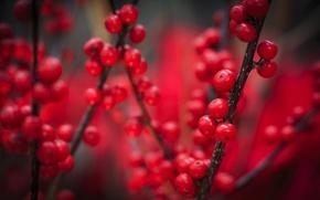 Picture autumn, macro, berries, red