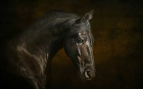 Picture horse, horse, mane, profile, handsome, crow