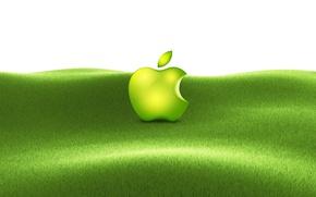 Picture apple, grass, mac