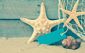Wallpaper shore, seashells, beach, beach, sand, sea, sand, shell, summer, starfish