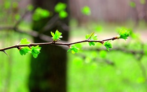 Picture blur, Branch, leaves