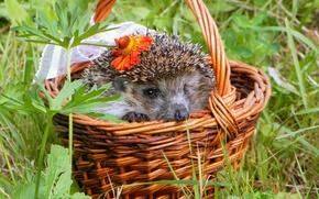 Picture flower, grass, needles, basket, muzzle, hedgehog