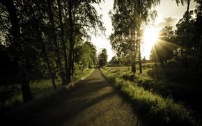 Picture road, light, trees, landscape