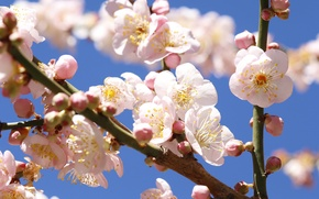 Picture the sky, flowers, tree, branch, spring, garden