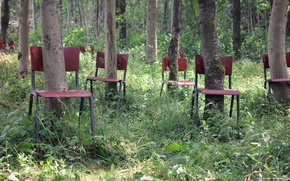 Picture forest, trees, chairs