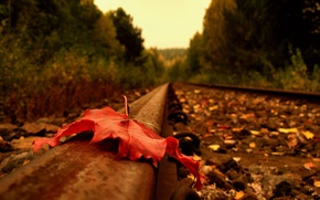 Picture road, autumn, sheet, rails